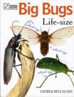 Big Bugs Life-Size - Book