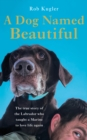 A Dog Named Beautiful : The true story of the Labrador who taught a Marine to love life again - Book