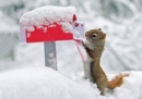 Squirrel's Greetings Notecards - Book