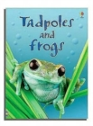 Tadpoles and Frogs - Book
