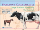 Spurgeon's Color Atlas of Large Animal Anatomy : The Essentials - eBook