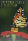 Butterflies & Moths - Book