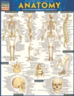 Anatomy - Reference Guide (8.5 x 11) : a QuickStudy reference tool - eBook