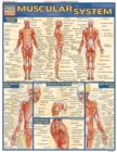 Muscular System - eBook