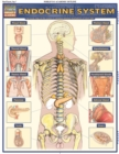 Endocrine System : QuickStudy Anatomy Reference Guide - eBook
