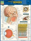 Anatomy Of The Senses : QuickStudy Reference Guide - eBook