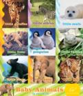 Baby Animals in the Wild - eBook