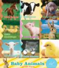 Baby Animals on the Farm - eBook