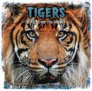 Tigers : Built for the Hunt - Book