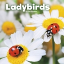 Ladybirds - eBook