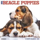 Just Beagle Puppies 2020 Wall Calendar (Dog Breed Calendar) - Book