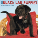 Just Black Lab Puppies 2020 Wall Calendar (Dog Breed Calendar) - Book