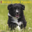 Just Border Collie Puppies 2020 Wall Calendar (Dog Breed Calendar) - Book