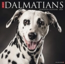 Just Dalmatians 2020 Wall Calendar (Dog Breed Calendar) - Book