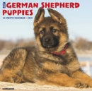 Just German Shepherd Puppies 2020 Wall Calendar (Dog Breed Calendar) - Book
