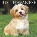 Just Havanese 2020 Wall Calendar - Book