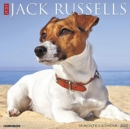Just Jack Russells 2020 Wall Calendar (Dog Breed Calendar) - Book