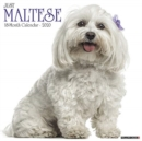 Just Maltese 2020 Wall Calendar (Dog Breed Calendar) - Book
