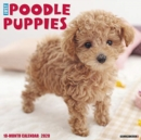Just Poodle Puppies 2020 Wall Calendar (Dog Breed Calendar) - Book