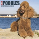 Just Poodles 2020 Wall Calendar (Dog Breed Calendar) - Book