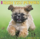 Just Shih Tzu Puppies 2020 Wall Calendar (Dog Breed Calendar) - Book