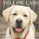 Just Yellow Labs 2020 Wall Calendar (Dog Breed Calendar) - Book