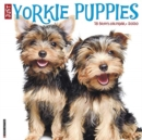 Just Yorkie Puppies 2020 Wall Calendar (Dog Breed Calendar) - Book