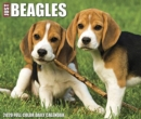 Just Beagles 2020 Box Calendar (Dog Breed Calendar) - Book