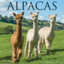 Alpacas 2021 Wall Calendar - Book