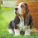 Just Basset Hound Puppies 2021 Wall Calendar (Dog Breed Calendar) - Book