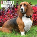Just Basset Hounds 2021 Wall Calendar (Dog Breed Calendar) - Book