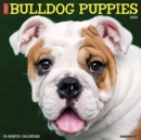 Just Bulldog Puppies 2021 Wall Calendar (Dog Breed Calendar) - Book