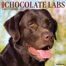 Just Chocolate Labs 2021 Wall Calendar (Dog Breed Calendar) - Book