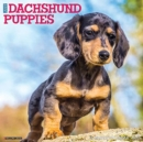 Just Dachshund Puppies 2021 Wall Calendar (Dog Breed Calendar) - Book