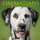 Just Dalmatians 2021 Wall Calendar (Dog Breed Calendar) - Book