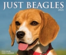 Just Beagles 2021 Box Calendar (Dog Breed Calendar) - Book