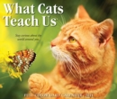 What Cats Teach Us 2021 Box Calendar - Book