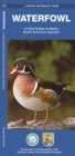 Waterfowl : A Field Guide to Native North American Species - Book