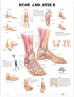 Foot and Ankle Anatomical Chart - Book