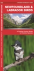 Newfoundland & Labrador Birds : A Folding Pocket Guide to Familiar Species - Book