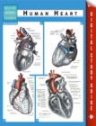 Human Heart (Speedy Study Guides) - eBook