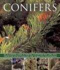 Conifers - Book