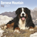 Bernese Mountain Dog 2021 Wall Calendar - Book