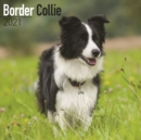 Border Collie 2021 Wall Calendar - Book