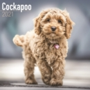 Cockapoo 2021 Wall Calendar - Book