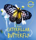 Lifecycles: Caterpillar to Butterfly - Book