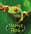 Lifecycles: Tadpole to Frog - Book