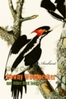 Downy Woodpecker and Other Bird Songs - eAudiobook