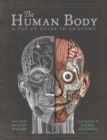 The Human Body : A Pop-Up Guide to Anatomy - Book