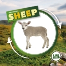 Life Cycle of a Sheep - Book